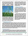 0000074433 Word Templates - Page 4