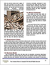 0000074470 Word Template - Page 4