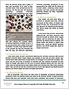 0000074528 Word Template - Page 4
