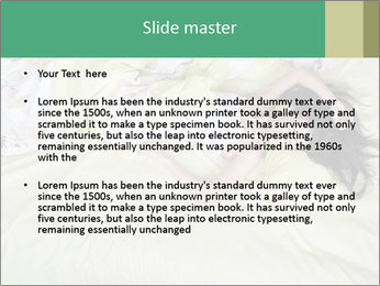 0000074568 PowerPoint Template - Slide 2
