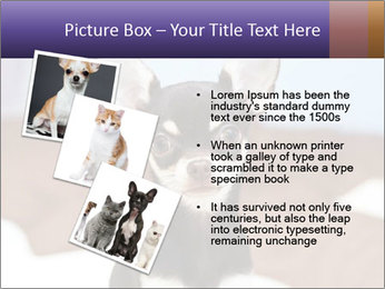 0000074569 PowerPoint Template - Slide 17