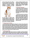 0000074569 Word Templates - Page 4