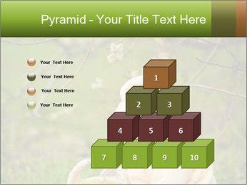 0000074635 PowerPoint Template - Slide 31