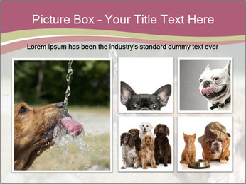 0000074651 PowerPoint Template - Slide 19