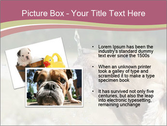 0000074651 PowerPoint Template - Slide 20