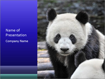 0000074658 PowerPoint Templates - Slide 1