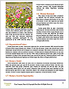 0000074659 Word Template - Page 4