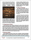 0000074660 Word Template - Page 4
