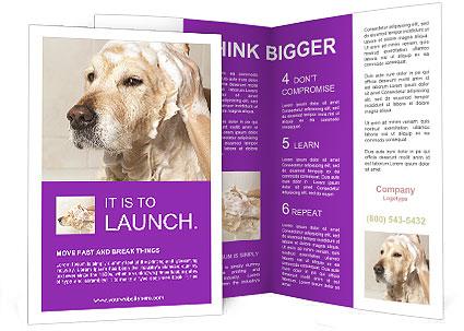 0000074715 Brochure Templates