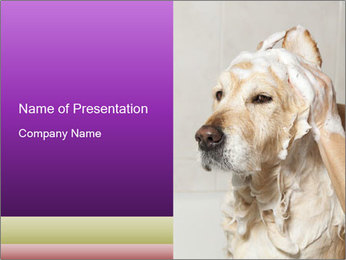 0000074715 PowerPoint Templates - Slide 1