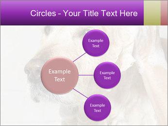 0000074715 PowerPoint Templates - Slide 79