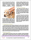 0000074715 Word Templates - Page 4