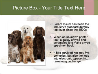 0000074724 PowerPoint Templates - Slide 13
