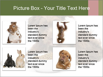 0000074724 PowerPoint Templates - Slide 14