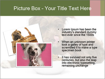 0000074724 PowerPoint Templates - Slide 20
