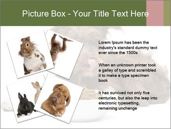0000074724 PowerPoint Templates - Slide 23