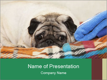 0000074728 PowerPoint Template - Slide 1