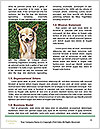 0000074728 Word Template - Page 4