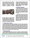 0000074729 Word Templates - Page 4