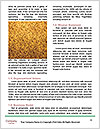 0000074769 Word Templates - Page 4