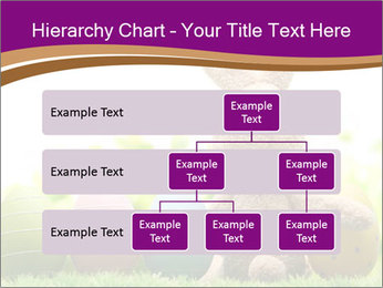 0000074796 PowerPoint Templates - Slide 67
