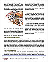0000074877 Word Template - Page 4