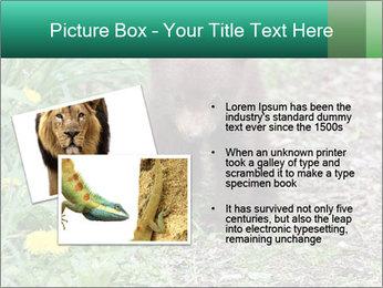 0000074901 PowerPoint Templates - Slide 20