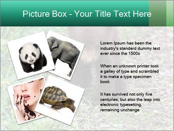 0000074901 PowerPoint Templates - Slide 23
