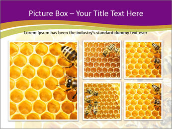 0000075024 PowerPoint Template - Slide 19