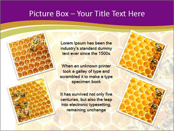 0000075024 PowerPoint Template - Slide 24