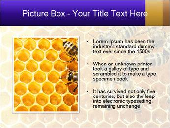 0000075025 PowerPoint Templates - Slide 13