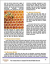 0000075025 Word Template - Page 4