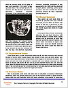 0000075070 Word Templates - Page 4