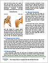 0000075081 Word Templates - Page 4