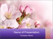 0000075126 PowerPoint Templates