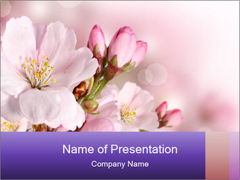 0000075126 PowerPoint Template - Slide 1