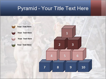 0000075135 PowerPoint Templates - Slide 31
