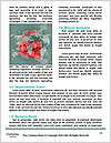 0000075165 Word Template - Page 4