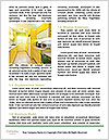 0000075167 Word Template - Page 4
