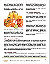 0000075181 Word Template - Page 4