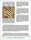 0000075187 Word Templates - Page 4