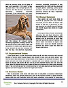 0000075221 Word Template - Page 4