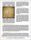 0000075238 Word Templates - Page 4