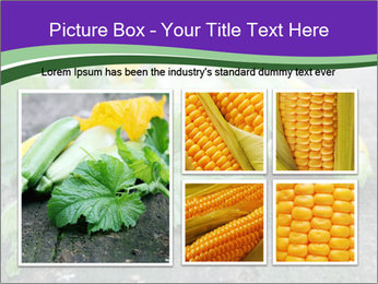 0000075339 PowerPoint Template - Slide 19