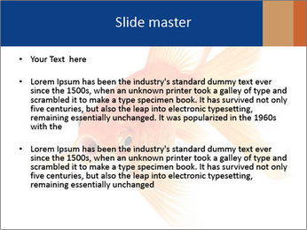 0000075349 PowerPoint Template - Slide 2