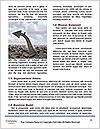 0000075358 Word Template - Page 4