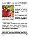 0000075370 Word Template - Page 4