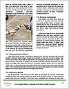 0000075414 Word Template - Page 4