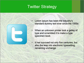 0000075424 PowerPoint Template - Slide 9