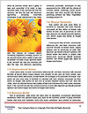 0000075467 Word Templates - Page 4